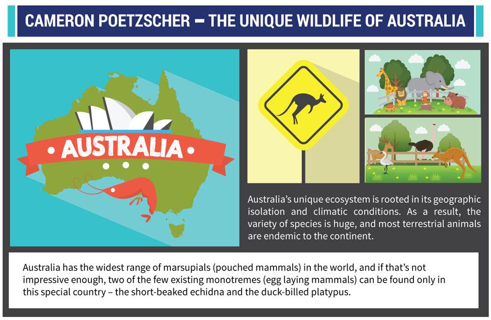 Australian Wildlife Infographic-Cameron Poetzscher