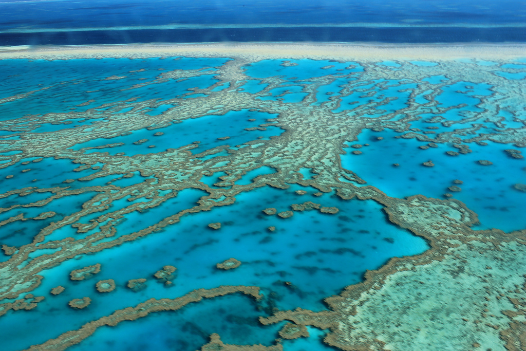 The Great Barrier Reef is Fighting for Its Life